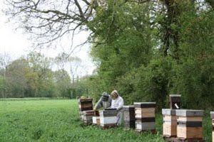 Beckys Bees – Apiary In Andover