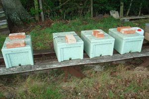 Beckys Bees – Poly Nuc's In Apiary